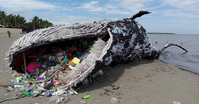"A Haunting ""Dead Whale"" Has Washed Up in Manila"
