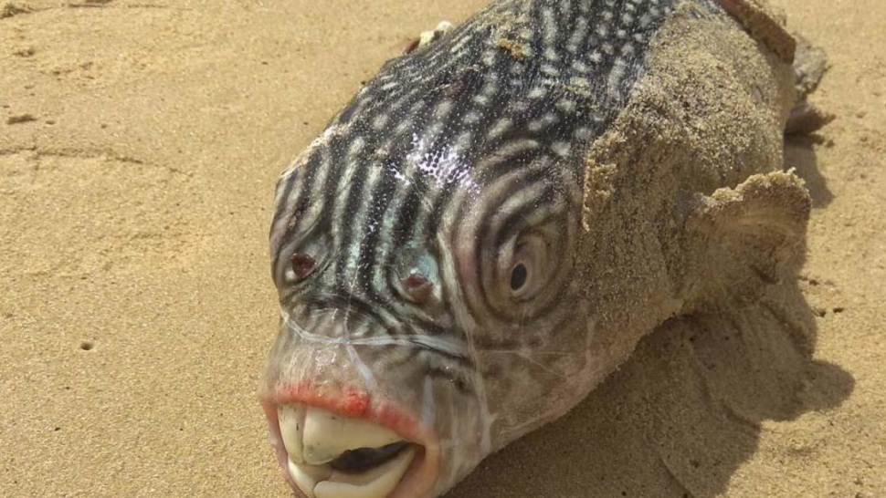 Russian Fisherman's Photos Of Deep-Sea Fish Will Give You Nightmares