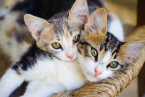 Good News Allergy Sufferers, The World's first Cat Allergy Vaccine Is Coming Soon