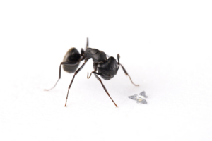 Revolutionary Winged Microchips are Smaller Than An Ant